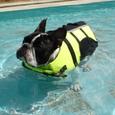 プール、プール!