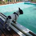プールを眺める